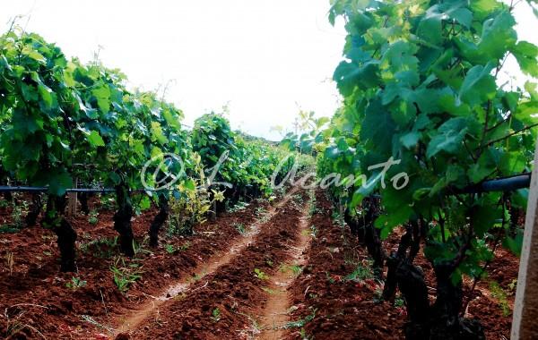 Puglian red lands