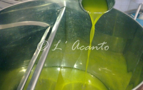 Olive Harvest in Puglia one more chance to learn Italian