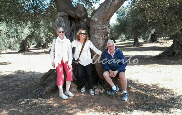 learning Italian by visiting old olive groves