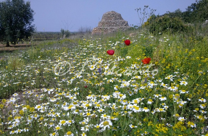 Spring time in Puglia