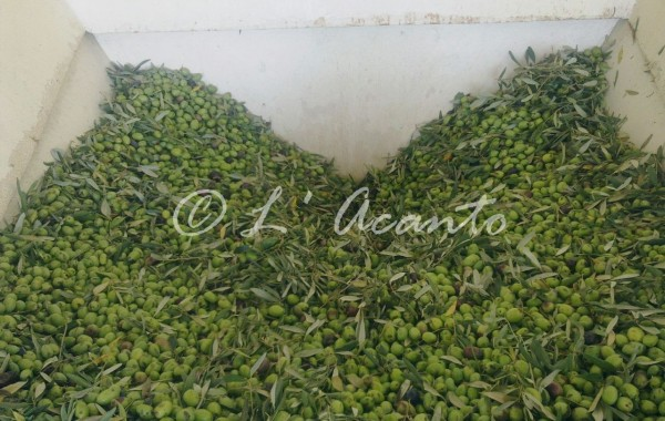millions of olives